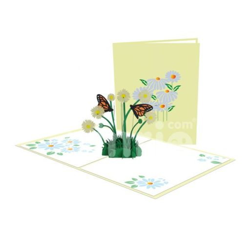 Daisy Chrysanthemum Card